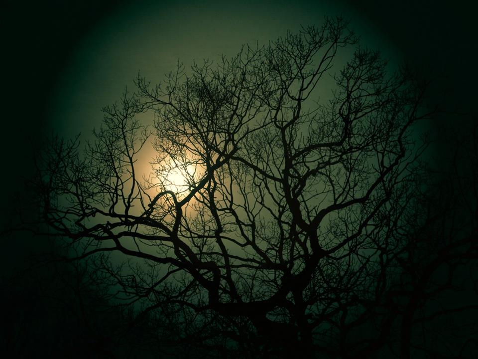Bright moon behind the trees